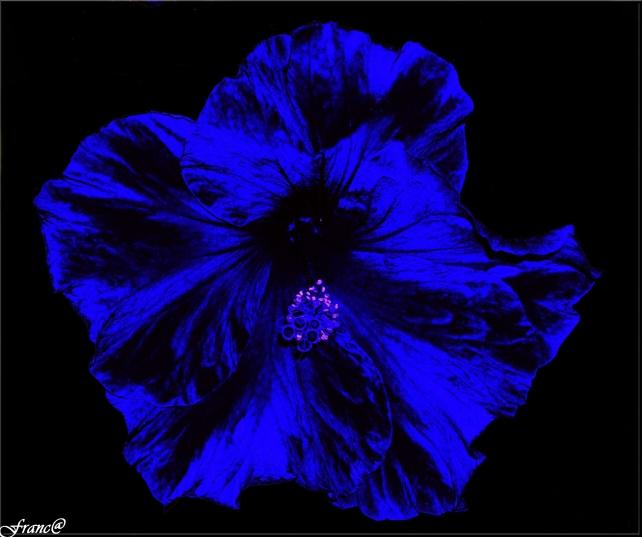Vestita di blu